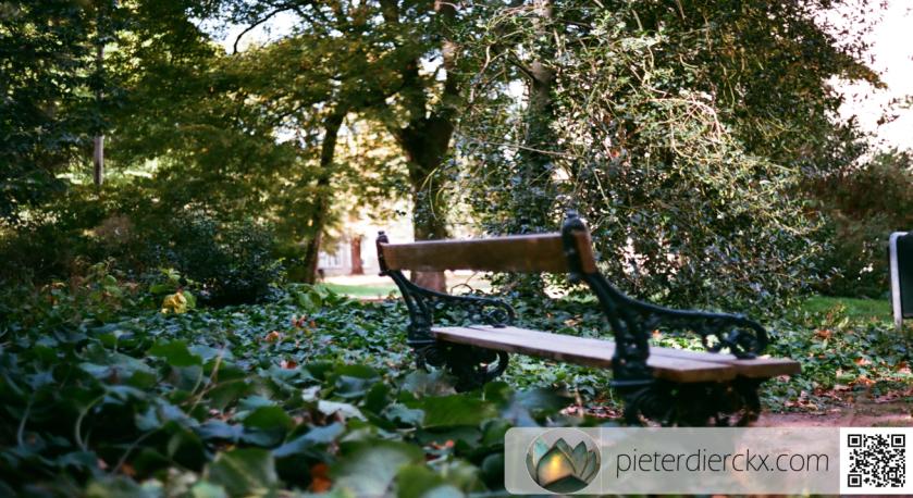 bench bank banc klimop lierre ivy natuur nature foto photo