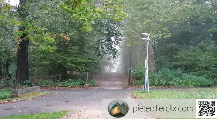 natuur nature fog mist brouillard bos forest forêt