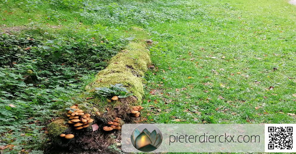 wood bois hout tree arbre boom natuur nature forêt bos woods