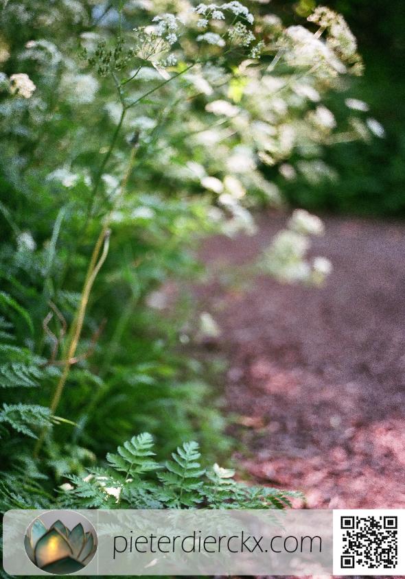 (van) Nature 18